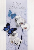 MD305 - Retail $3.99 Each - Mothers Day General Greeting Cards PKD 3 - Premium