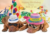 6049 - $3.99 Retail Each - Birthday Card From Both Cute PKD 6