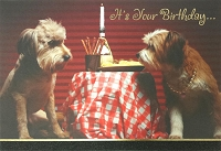 6070 - $3.49 Retail Each - Birthday Card Cute PKD 6
