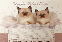 6077 - $3.49 Retail Each - Birthday Card Cute PKD 6