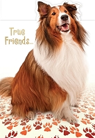 6081 - $3.99 Retail Each - Friendship Greeting Cards Cute PKD 6