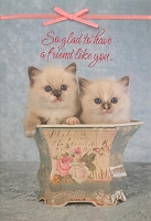 6082 - $3.49 Retail Each - Friendship Greeting Cards Cute PKD 6