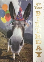 6153 - $3.49 Retail Each - Humorous Birthday Greeting Cards PKD 6