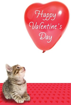 val11042 - $2.80 Retail Each - Valentine's Day General Cute Greeting Cards - English Language - wholesale units of 6 cards
