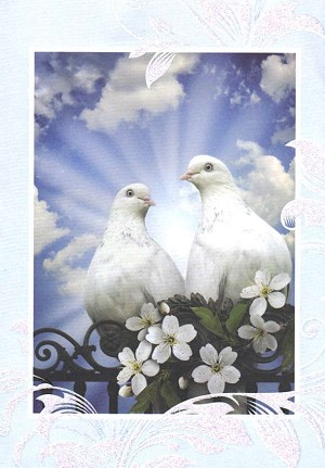 Wholesale blank note card greeting card 42615 4825 349 retail each blank note card pkd 6 m4hsunfo